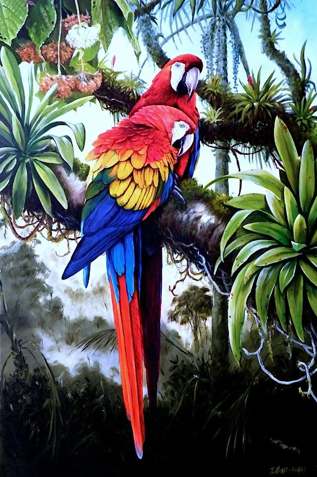 Scarlet Macaw clipart scarlett #8