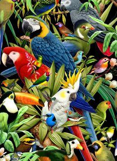 Scarlet Macaw clipart tropical bird #12