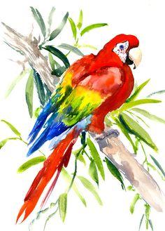 Scarlet Macaw clipart tropical bird #5