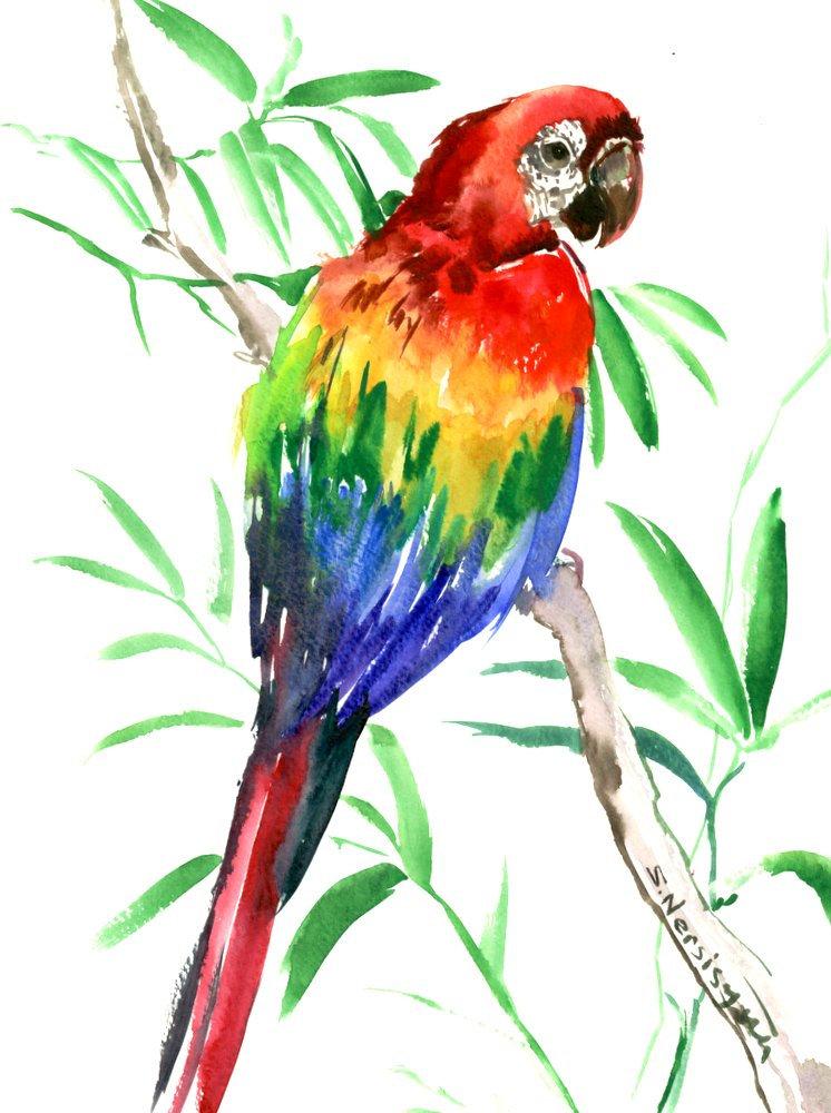 Scarlet Macaw clipart tropical bird #3