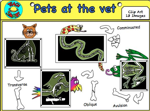 Bones clipart radiology At Pets 45 activities Papers