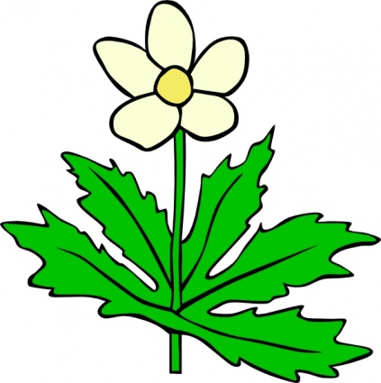 Science clipart flower Clip canadensis flower canadensis plant