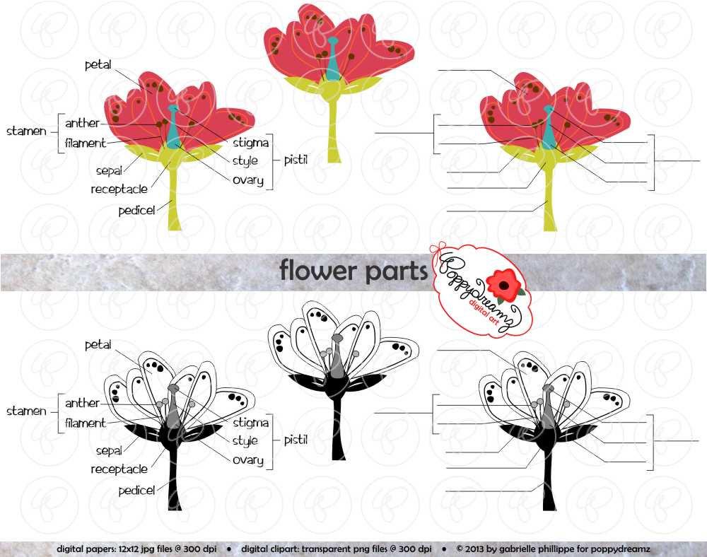 Science clipart flower Science  Science Science (300