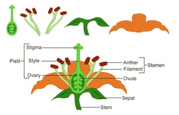 Science clipart flower Zevallos by Labeled Diagram Flower