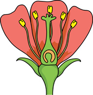 Science clipart flower Graphics petals a for stigma