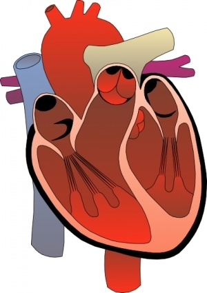 Science clipart heart #7