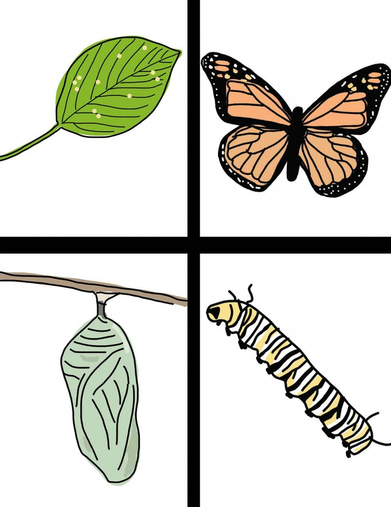 Egg clipart butterfly life cycle #2