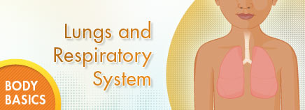 Science clipart respiratory system Respiratory and Respiratory and System