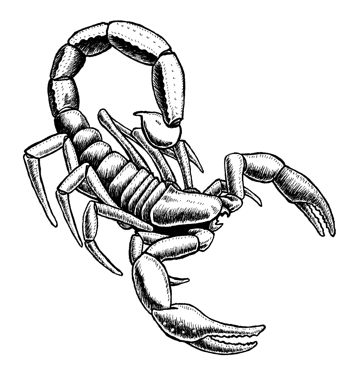 Drawn scorpion easy Clip hostted Scorpion Draw art