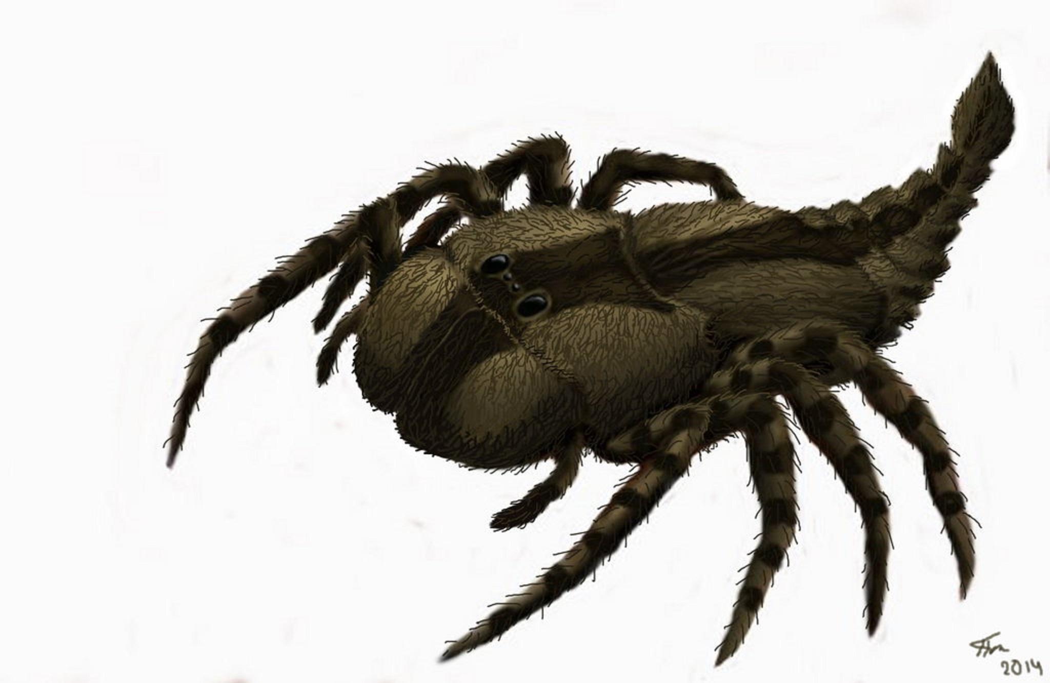 Scorpion clipart carboniferous #15