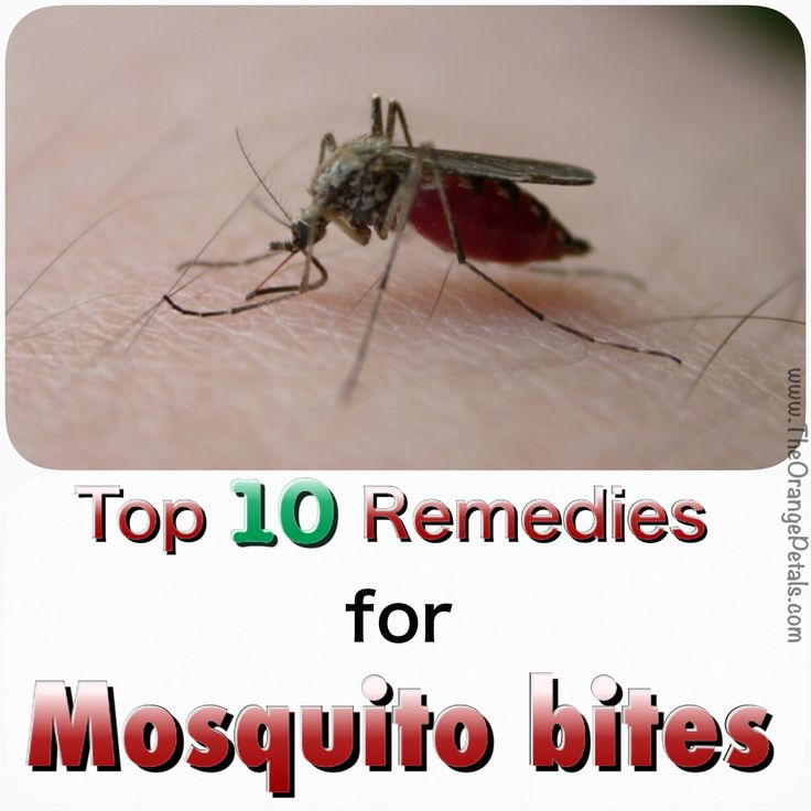 Mosquito clipart skin infection Becomes mosquitos bite When infection