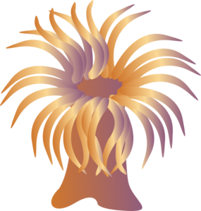 Sea Anemone clipart Anemone at Clker  Clip