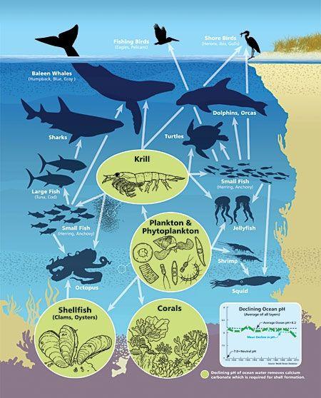 Sea Bed clipart ocean ecosystem #2