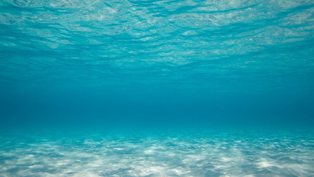 Sea Bed clipart ocean ecosystem #4
