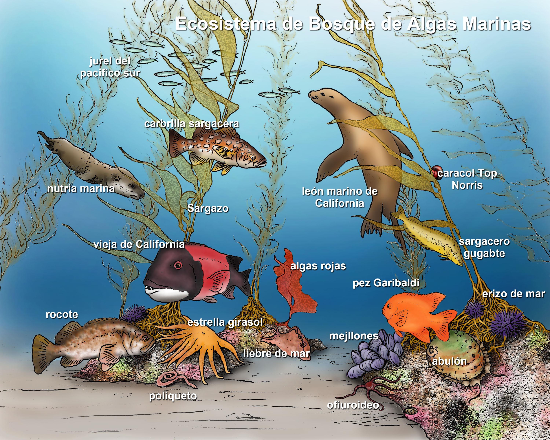 Sea Bed clipart ocean ecosystem #7