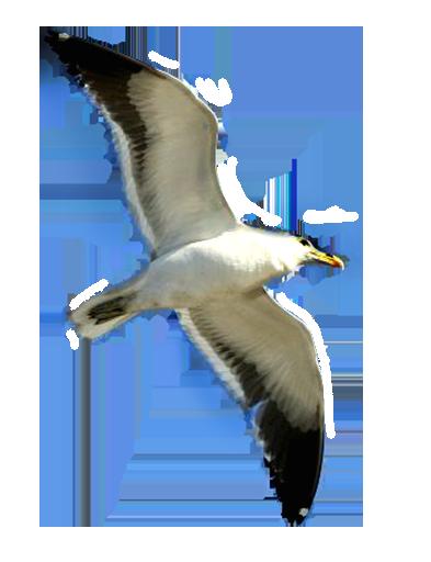 Seagull clipart transparent #2