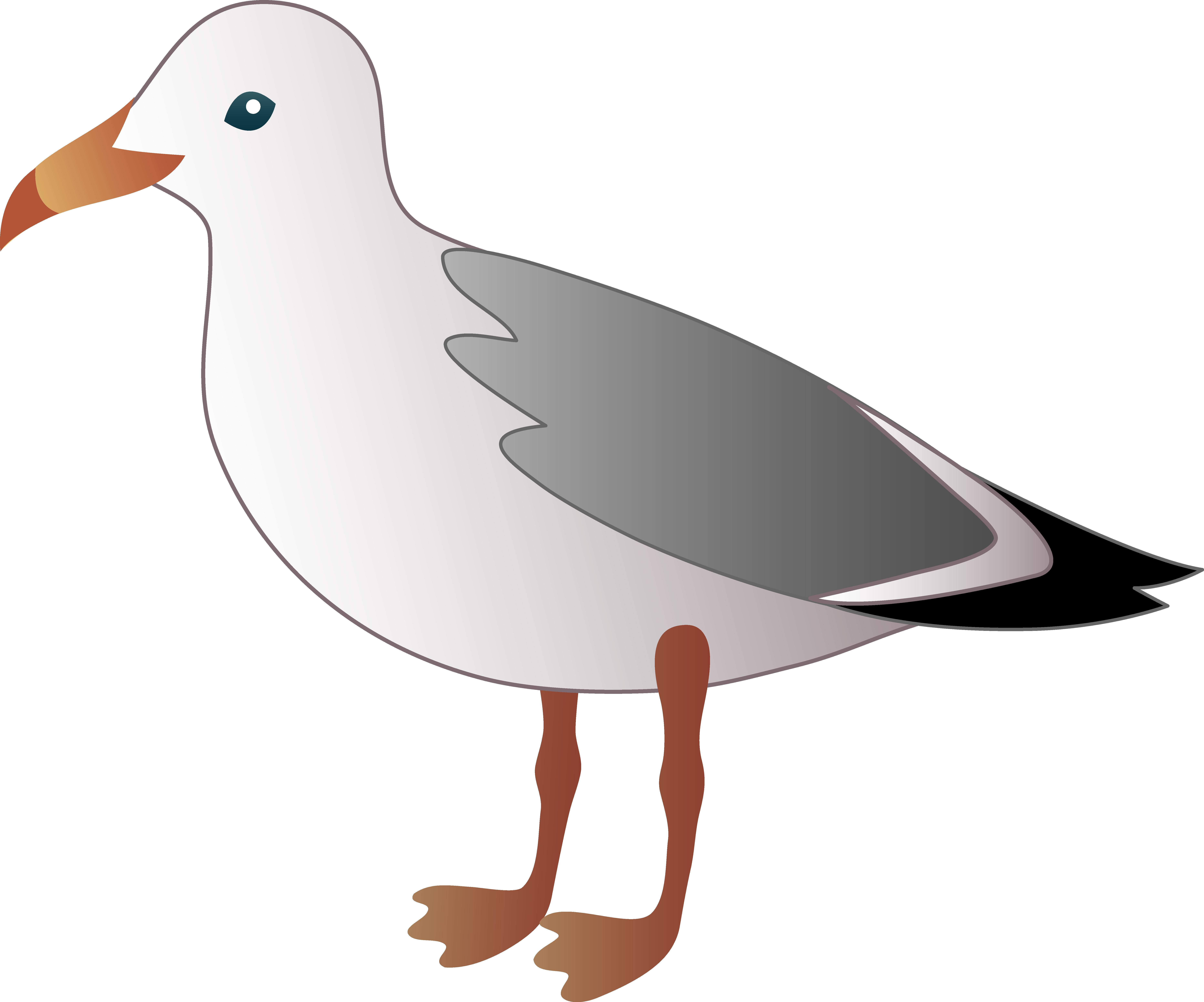 Sea Bird clipart Cartoons of birds Clipart Collection