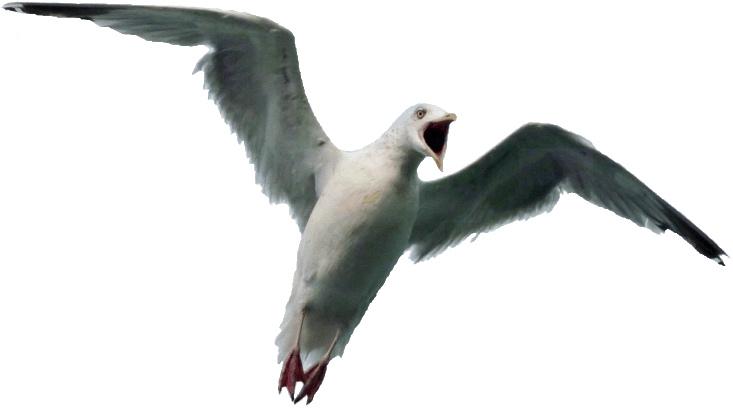 Sea Bird clipart Bird Bird – Clipart Sea