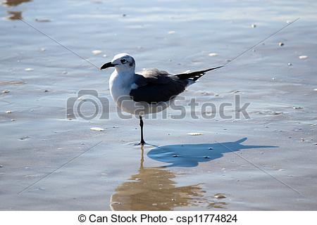 Sea Bird clipart one #9