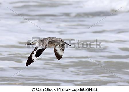 Sea Bird clipart one #11
