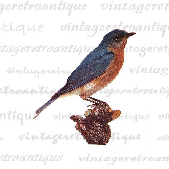 Sea Bird clipart robin #11