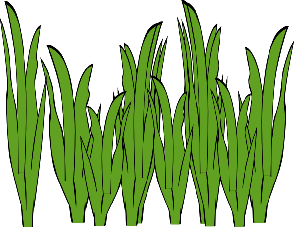 Sea clipart sea grass #3