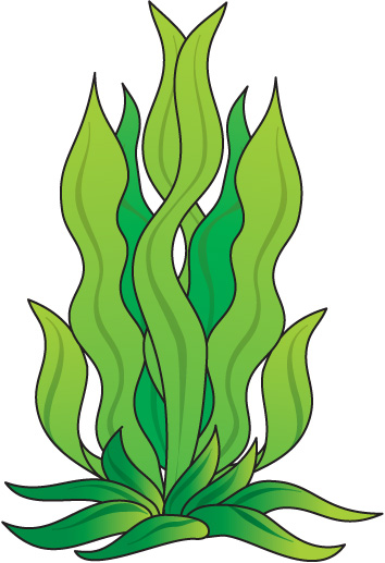 Sea clipart sea grass #10