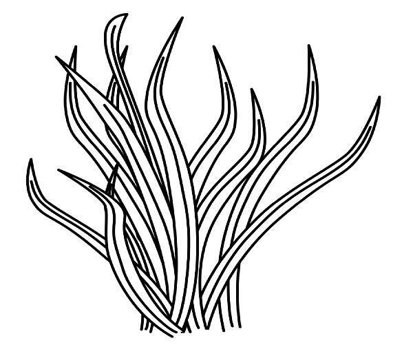 Sea Grass clipart black and white #13