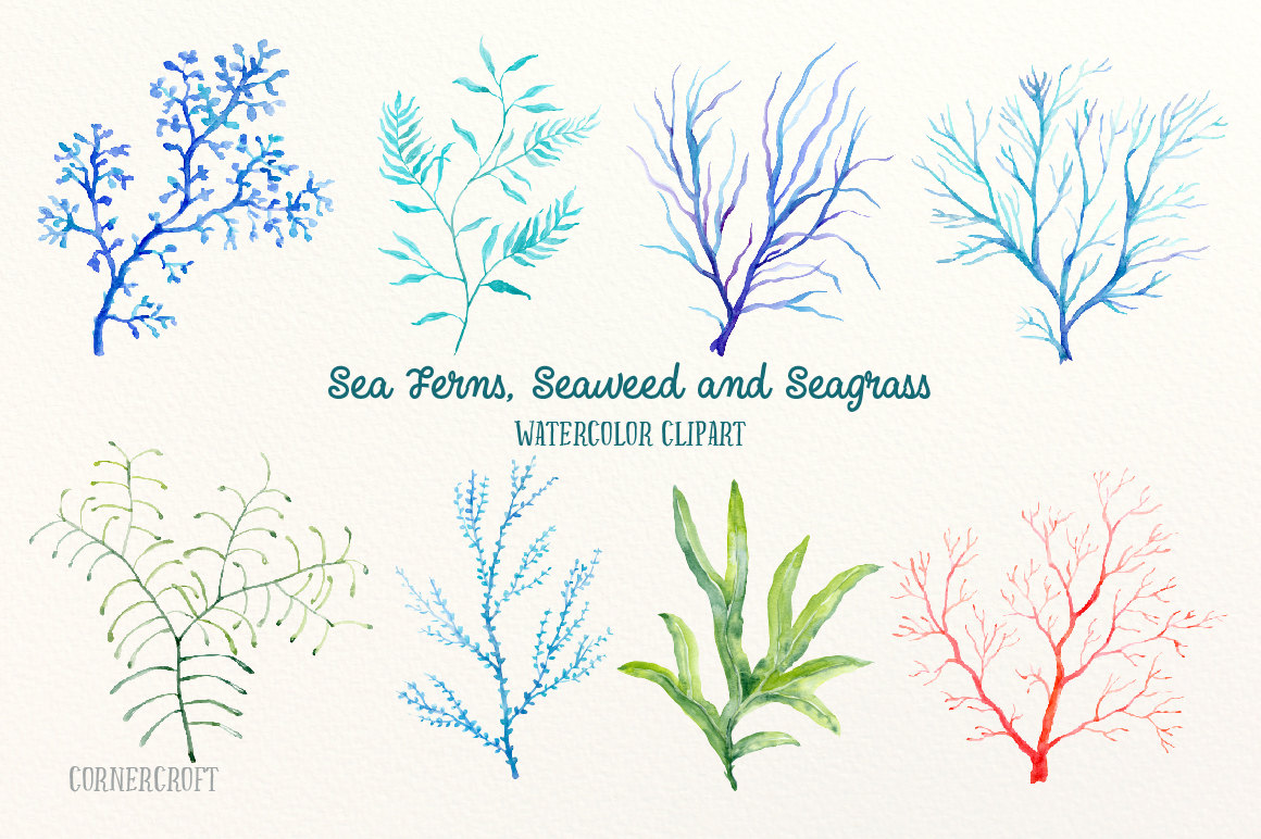 Seaweed clipart seagrass #12