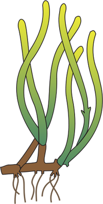 Sea clipart sea grass #14