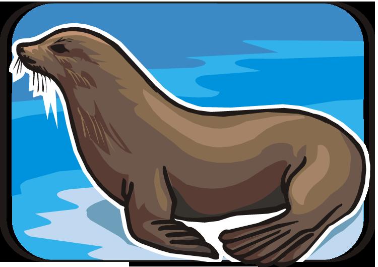 Sea Lion clipart Fans lion lion Clipart art