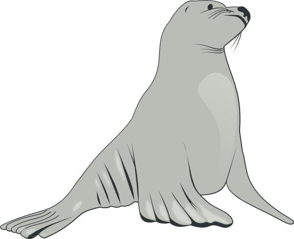 Sea Lion clipart ( clip Lion drawing art