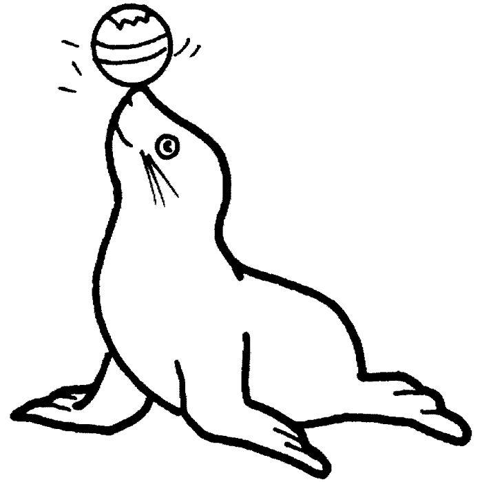 Sea Lion clipart carnival #8