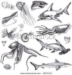 Drawn sea life realistic drawing By deviantart Ink SEA Marine