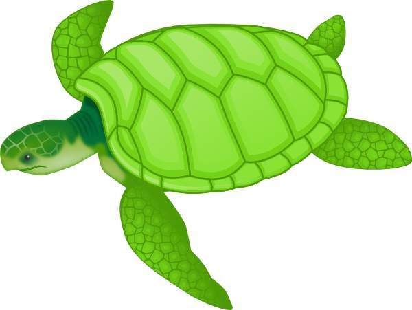 Sea Turtle clipart Collection Sea free sea turtle