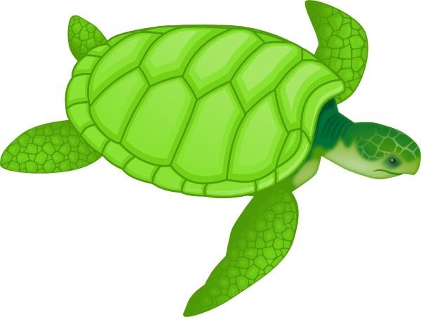 Sea Turtle clipart Art Green drawing  Free