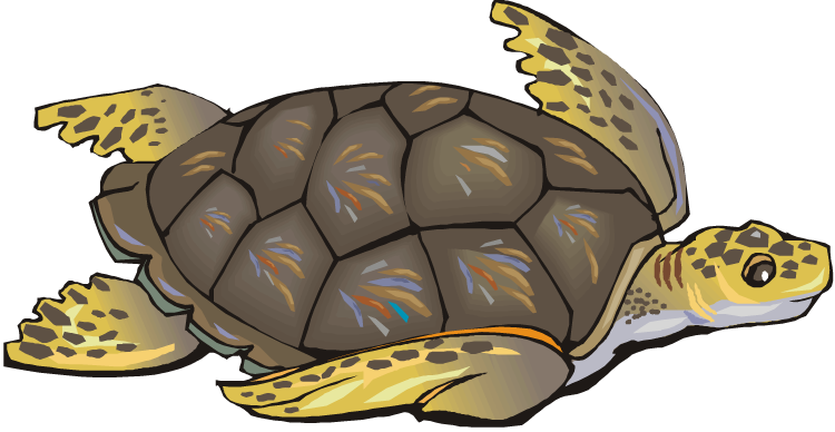 Brown clipart turtle Clipart Sea art images turtle