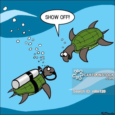 Sea Turtle clipart funny #12