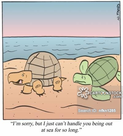 Sea Turtle clipart funny #10