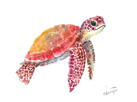 Sea Turtle clipart water animal #6