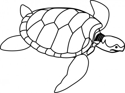Sea Turtle clipart water animal #3