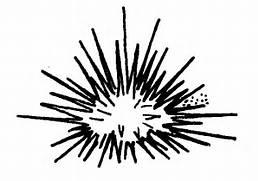 Sea Urchin clipart black and white #7