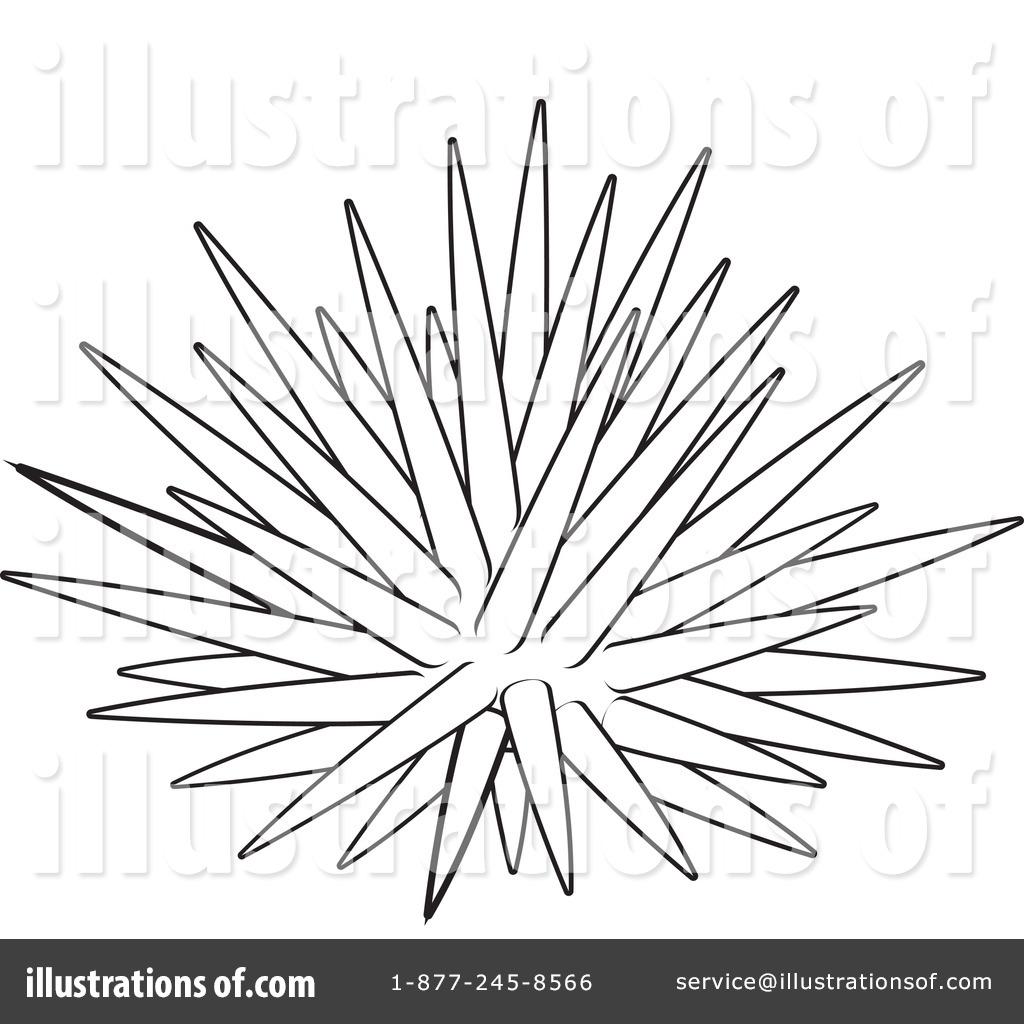 Sea Urchin clipart black and white #13