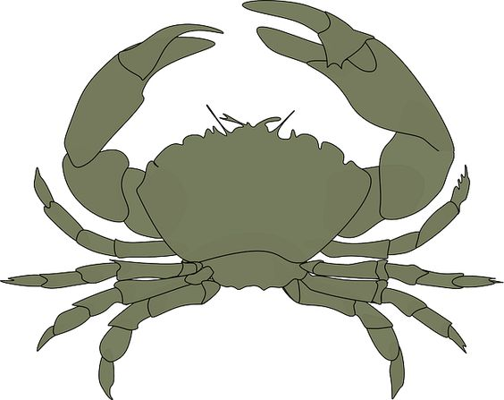 Crustacean clipart sea star Animal Claws Sea on