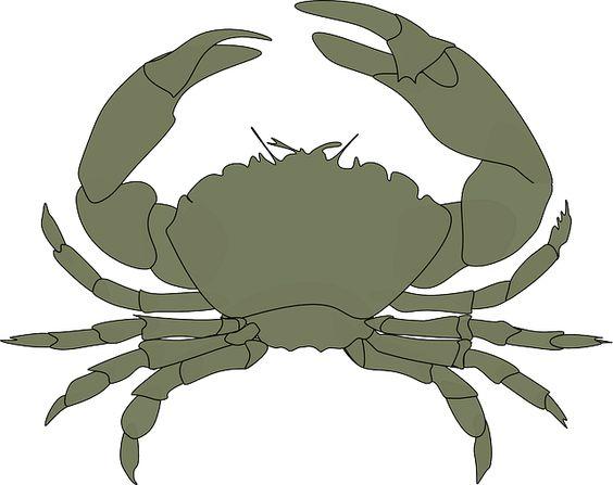 Crustacean clipart outline  Animal Water Pixabay Pincers
