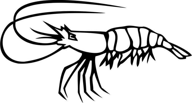 Black clipart shrimp Shrimp  Download Shrimp Art