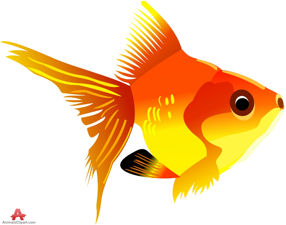 Angelfish clipart orange fish Clipart and Clipart Clipart the