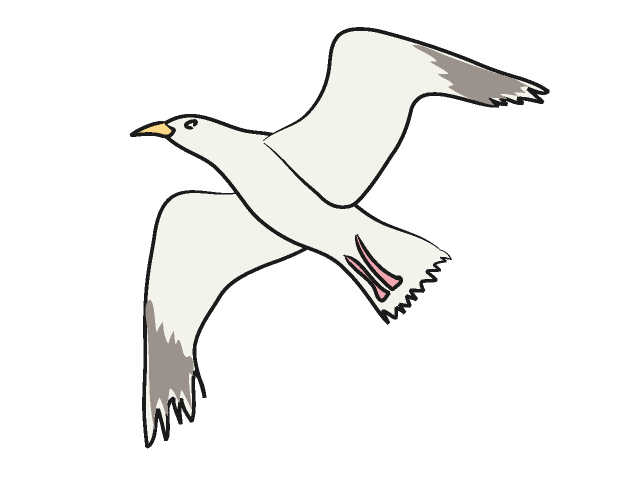 Seagull clipart Animal free Seagull art download