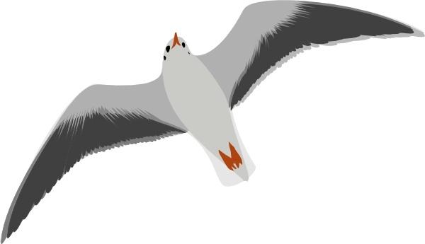 Seagull clipart Svg clip art Sea Seagull