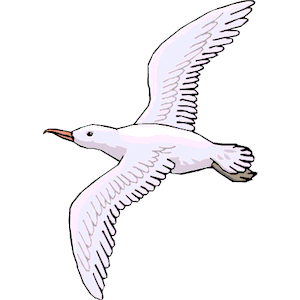 Seagull clipart Open svg drawing of seagull